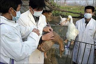 [Imagem: swine-bird-flu-duck-pig.jpg]