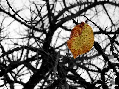 pidic encadrees photoblog amateur bordeaux rive droite feuille jaune derniere automne arbre