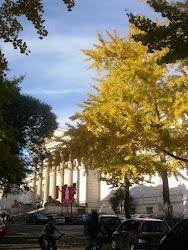 GINKGO BILOBA. Mi árbol favorito. Sendero en el Museo de La Plata.