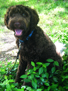 Alfie smiling cutely as he sits in some greenery