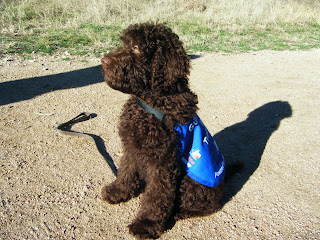 Alfie in blue jacket, sitting in the sunshine with his leash on the ground