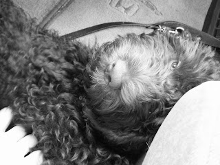 black & white shot of Alfie's head as he lies between the car seats on the way home, eyes half closed