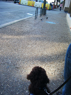 you can see the back of Alfie's head as he sits watching a couple of pigeons scrounging for crumbs in the distance