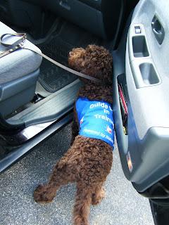 top view of Alfie, blue work jacket on, as he gets ready to jump in the open door of the van