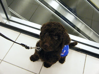Alfie sits in front of the escalators