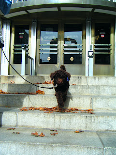 Alfie bounces down the courthouse steps, front paws in midair