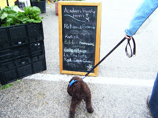 Alfie strains toward a chalkboard near a stand of lettuce