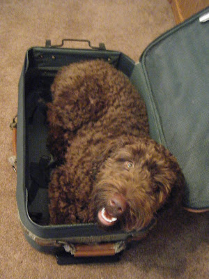 Alfie's looking up with a smile from where he's curled up inside my old green suitcase.