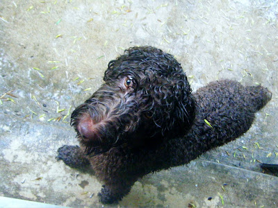 Looking down, you see a dripping wet Alfie standing with front feet on the step waiting to be let in