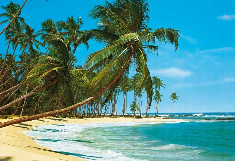 Fototapeten Palmenstrand : Beach with Palm Trees