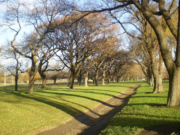 Hagley Park - Winter 08