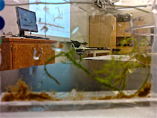 The Micro Aquarium