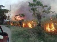 Manos criminales incendian cañaverales en zona Jimaní