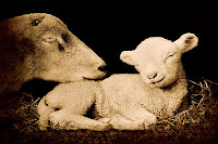 'Peaceful Lamb'