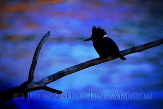 Kingfisher fishing in the fading dusk (c) John Ashley