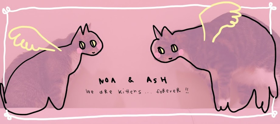 NOA & ASH - WE ARE KITTENS FOREVER!!