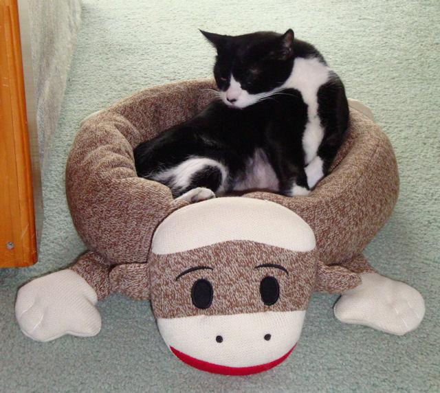 Sock Monkey Cat Bed