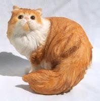 foto kucing persia 2
