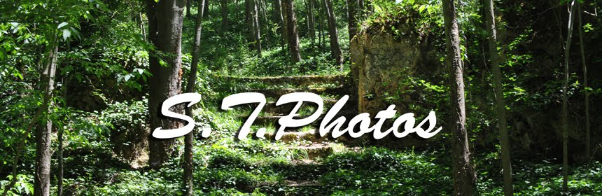 S.T.Photos