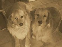 Mick & Duke