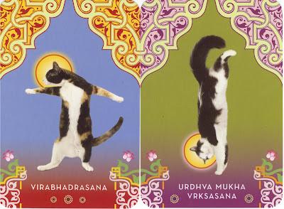 Youtube Cat Yoga