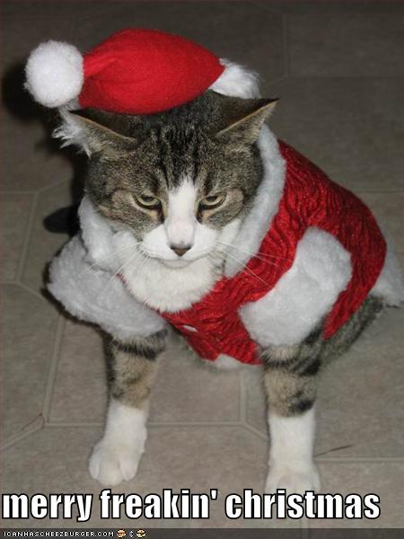 Cat and christmas Funny Cat Pictures Caption Splash