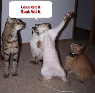 funny cat-4
