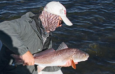 puting red back in water