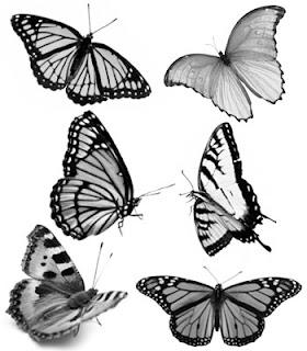 desenhar borboleta do jardin e colorir