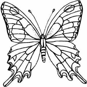 Desenhos Para Colori borboleta do jardin desenhar