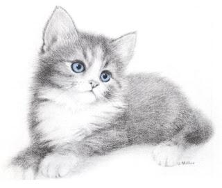Gatos em preto e branco