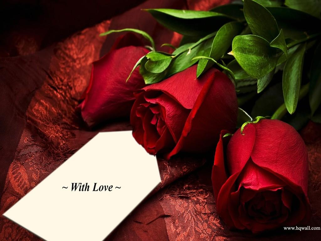 Lindas Rosas Vermelhas  Imagens de Flores