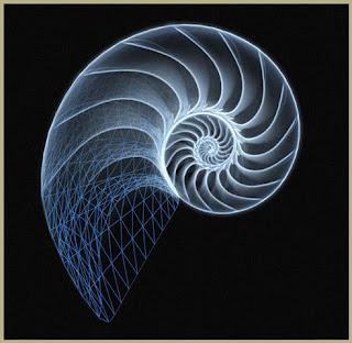 Immagine di una conchiglia di nautilus, esempio di applicazione della successione di Fibonacci