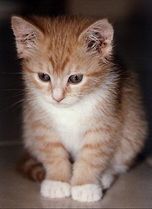Foto-Foto Kucing Lucu - Ristizona
