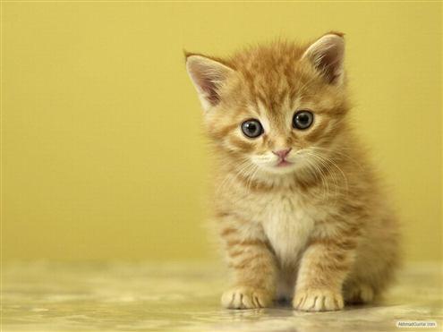 Foto anakan kucing yang imut