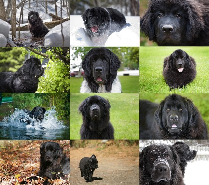 Extra Large Dog Rescue Ontario