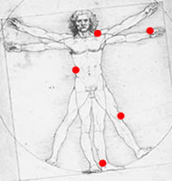 Home de Vitruvi amb les lesions més habituals en Judo