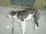 Perro Muerto en las calles de Bogotá