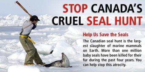 STOP CANADA's CRUEL SEAL HUNT - NARESH KADYAN