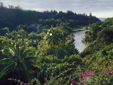 http://1.bp.blogspot.com/_dl6Szm-ZAuk/ShoVJy1ZlFI/AAAAAAAABZo/XmlLv1C31DQ/s1600/Hawaii+NationalTropicalBG.jpg