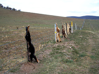 THE DOG LINE - DOG BARK COLLAR, DOG TRAINING COLLAR