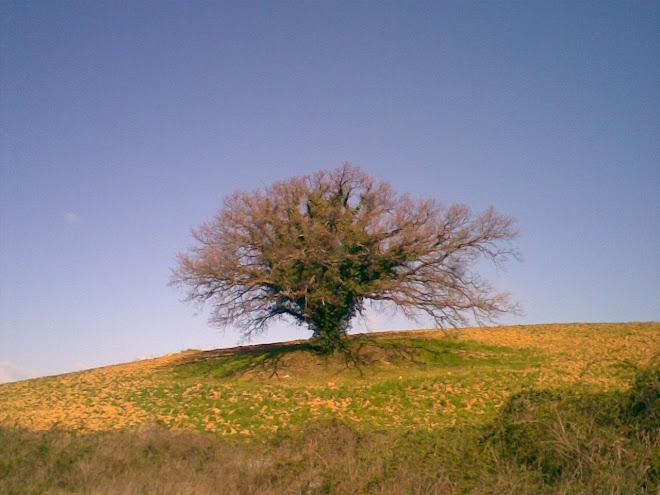 L'Albero della Toscana