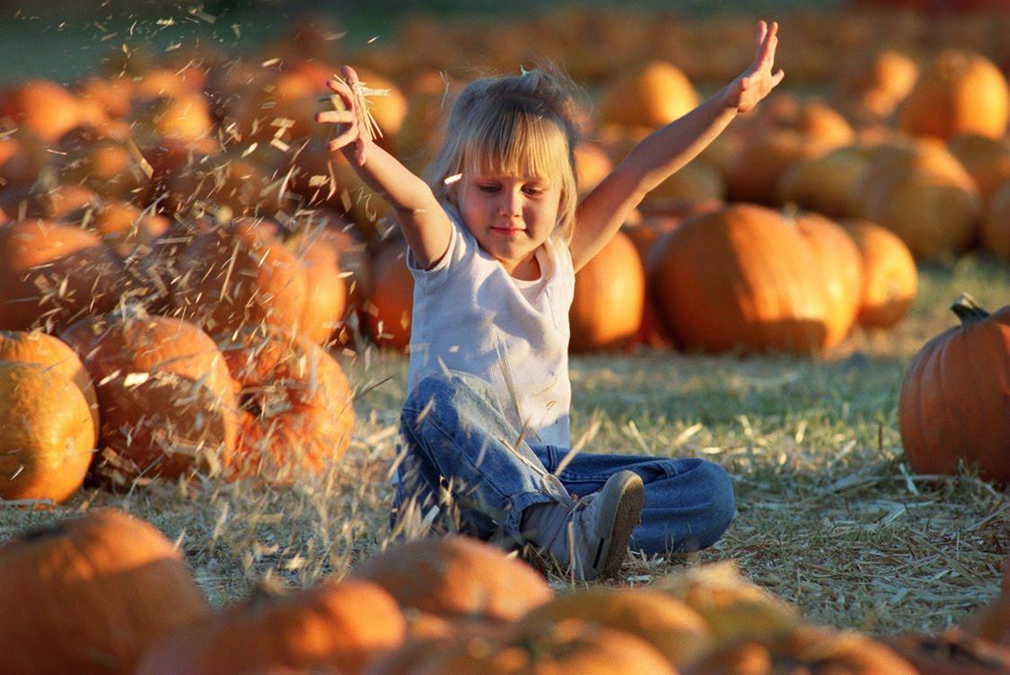 [PumpkinBlog]
