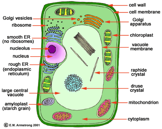 Biology  Cell Structure And Functions