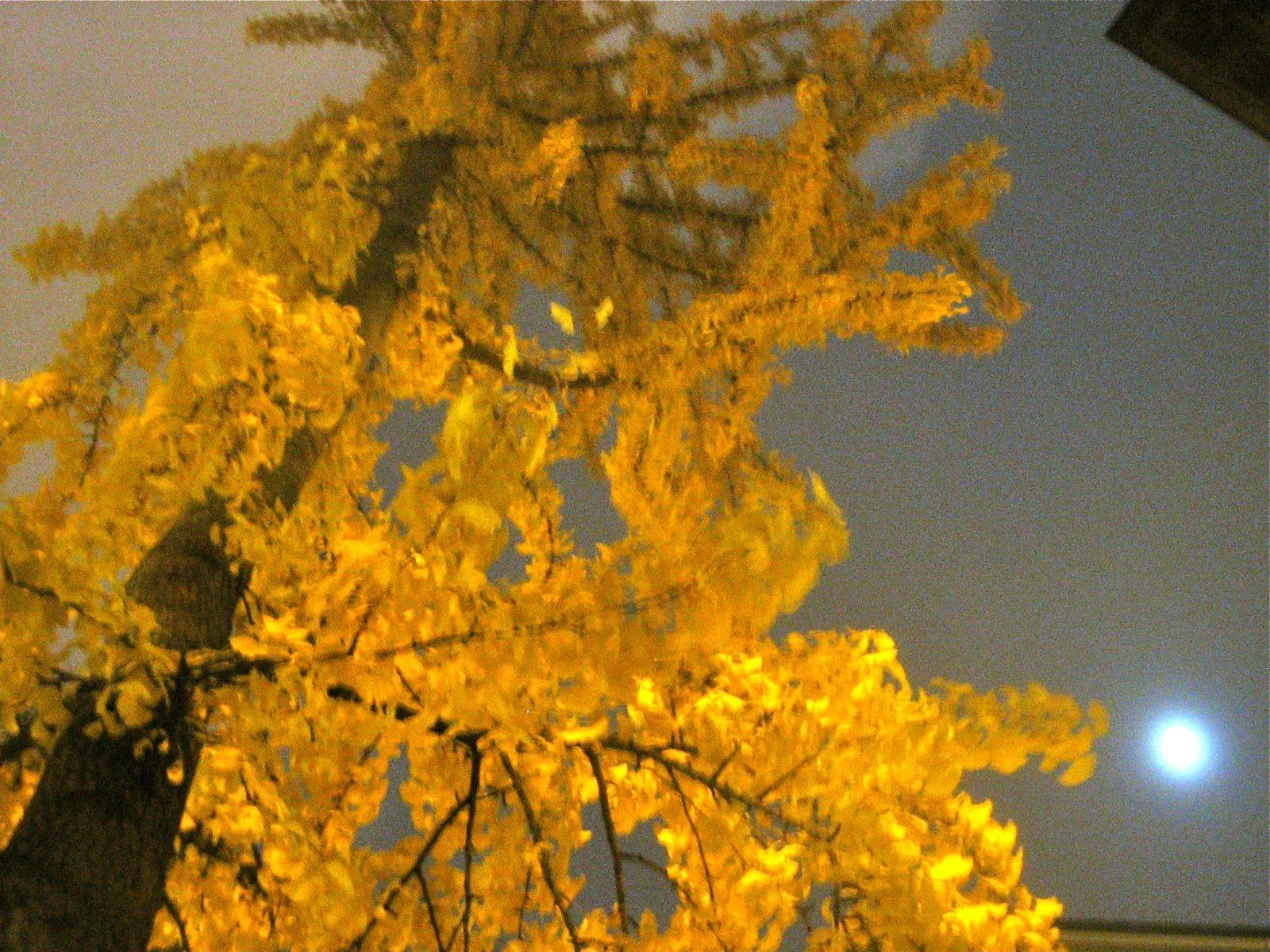 jeremiah s vanishing new york november 2010