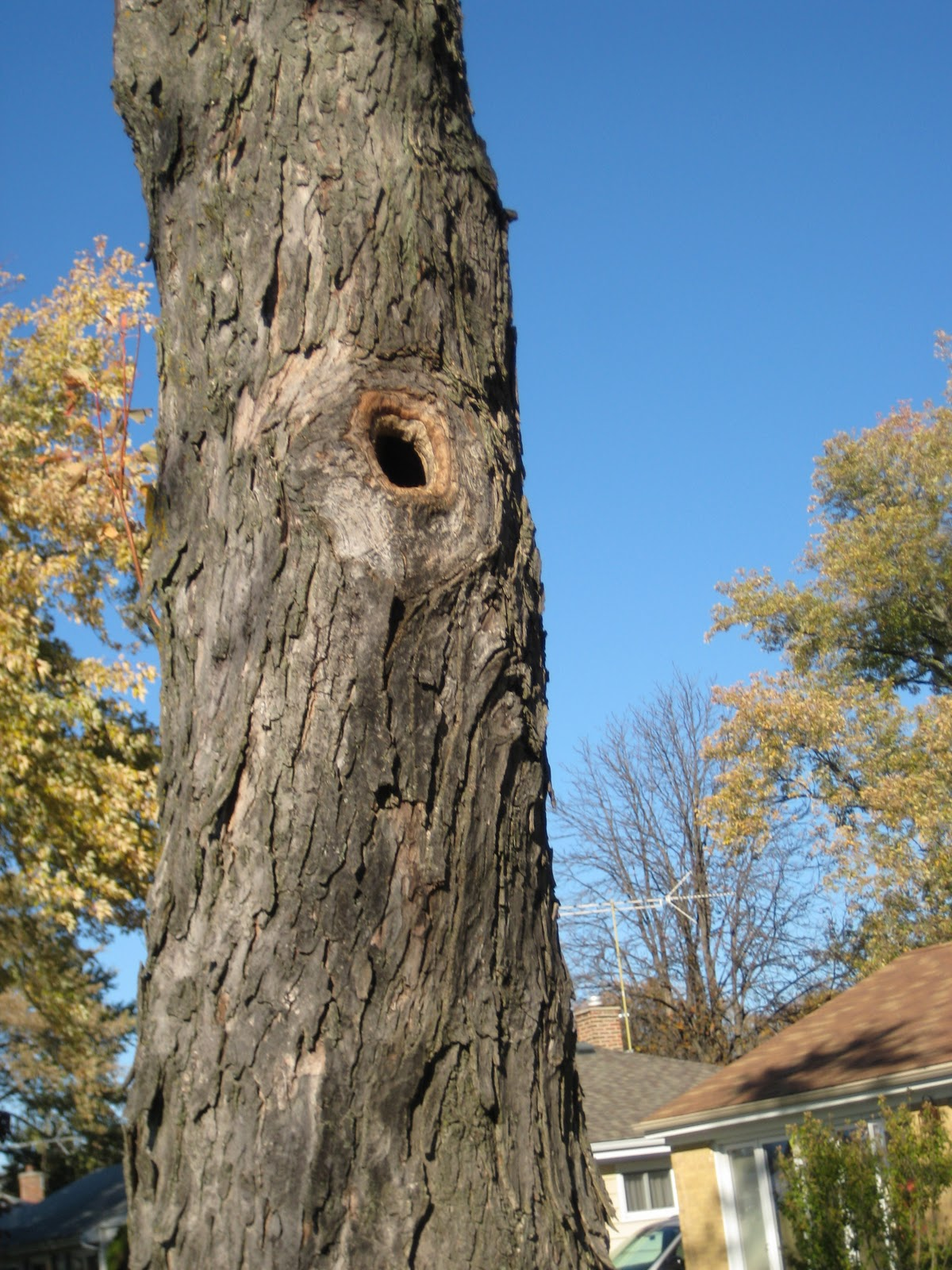 reinvention the journal of a dog lover book reader moviegoer in a maple tree in the front yard there is a knot hole in the trunk about eight feet off the ground a couple of weeks ago a family of squirrels resided