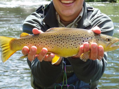 Virtual fly guides south platte river co fly fishing report for South platte fishing report