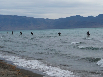 Virtual fly guides pyramid lake nv fly fishing report new for Fly fishing nevada