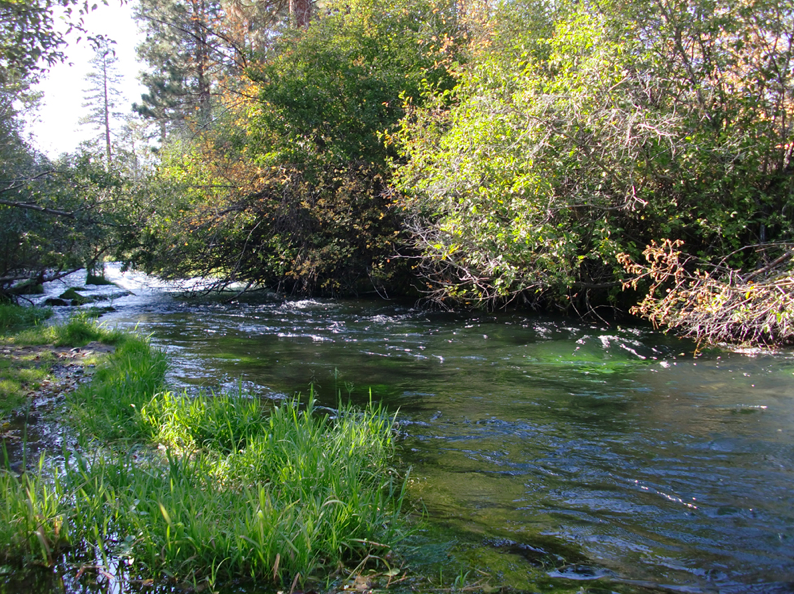 virtual fly guides hat creek ca fly fishing report