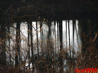 Eine Spiegelung in einem Waldteich